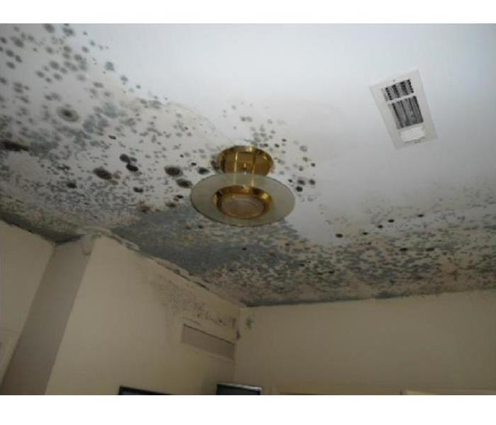 SERVPRO is Specially Equipped to Handle Mold