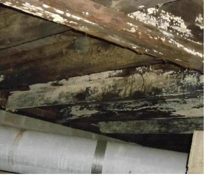 Mold Remediation Does Mold Grow Even in Drier Climates?