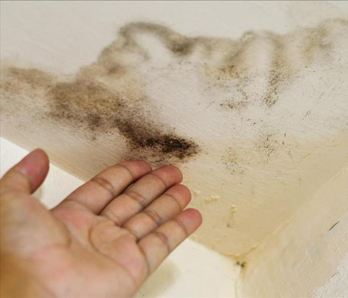 Mold Remediation Mold Removal and Remediation Information for Homes and Businesses